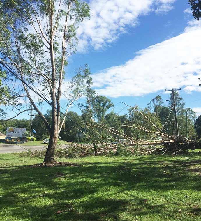 Trees on powerlines Sunshine Coast