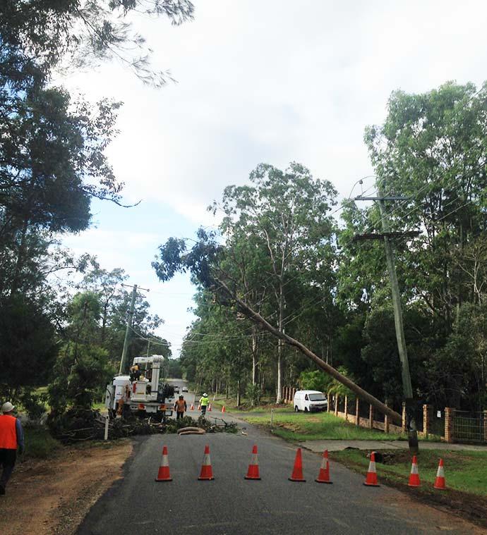 Trees on powerlines